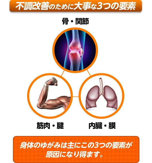 むくみ改善のために大事な3つの要素 骨・関節 / 筋肉・腱 / 内臓・膜